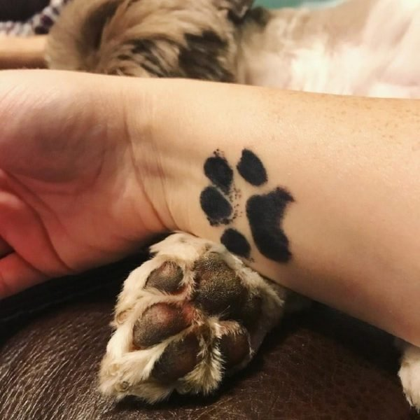 Pet Paw Prints Ink Pad Safe Non-Toxic Long Lasting Souvenir