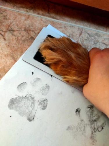 Pet Paw Prints Ink Pad Safe Non-Toxic Long Lasting Souvenir photo review