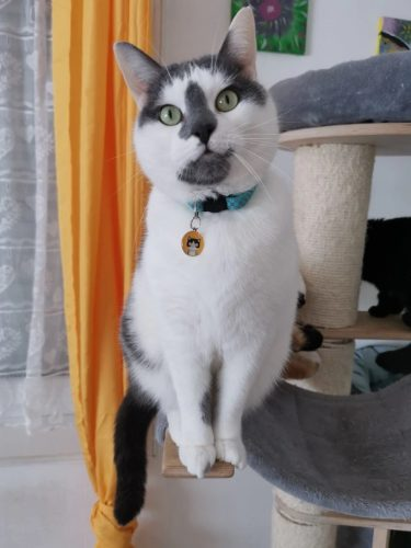 Cat Collar Pendants Adjustable Nylon Buckles Reflective photo review