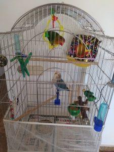 Bird Feeding Bowl Set Food Water Plastic Cage 3Pcs Set photo review