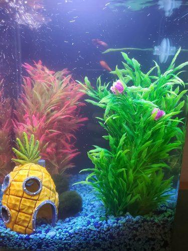 Aquarium Ornament SpongeBob Pineapple House Shrimp Decor photo review