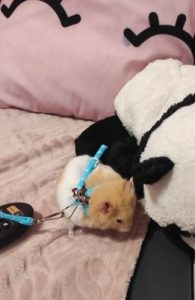 Hamster Leash Adjustable Belly Harness Soft Leash Rope photo review