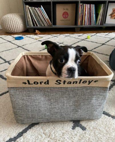 Personalized Pet Storage Box Basket Bin Collapsible Organizer photo review
