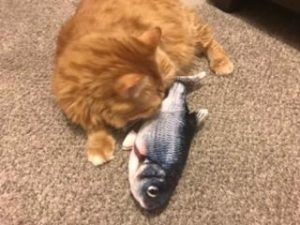 Floppy Fish Cats Interactive Moving Catnip Toys photo review