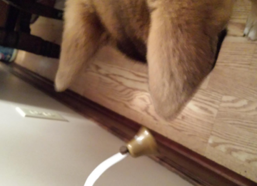 Dog Tinkle Bells Wall Mounted Potty Training Doorbell photo review