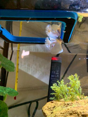 Fish Aquarium Feeding Floating Food Station Ring Square Shape photo review