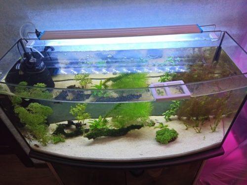 LED Aquarium Light Super Slim Extensible Waterproof Clip photo review